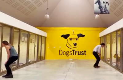 Dogs Trust is running create an immersive virtual reality experience to engage the public and demonstrate the impact donors can have for the thousands of dogs each year that the charity cares for.